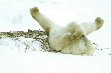 Hanging Out/ Arctic Playmates