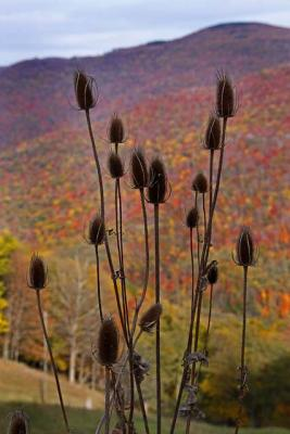 _mg_2475 Teasel And Fall Color