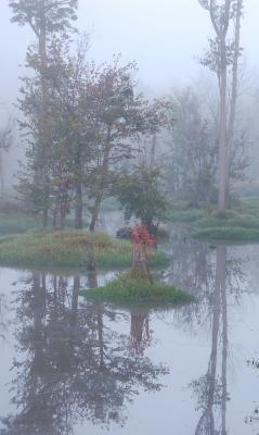 A Fogggy Morning On The Chickahominy River