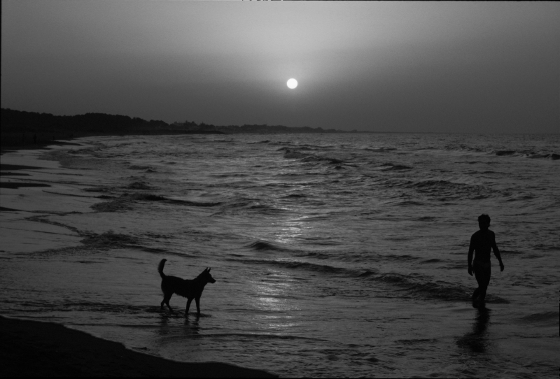 A Man And His Dog At The Beach