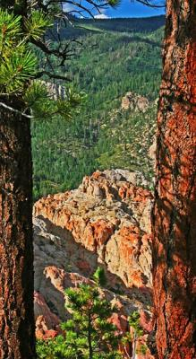 A Narrow View Of Nature
