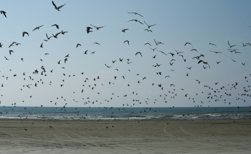 About A Million Seagulls