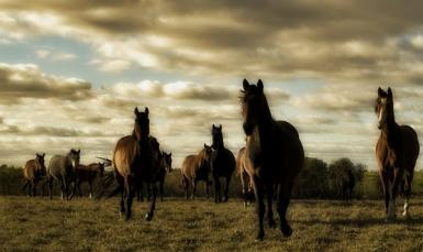 About Wild Horses