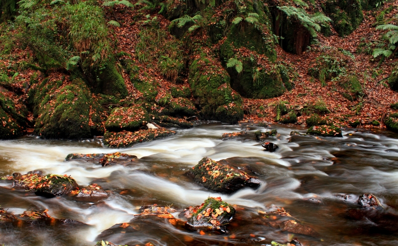 Autumn Streams