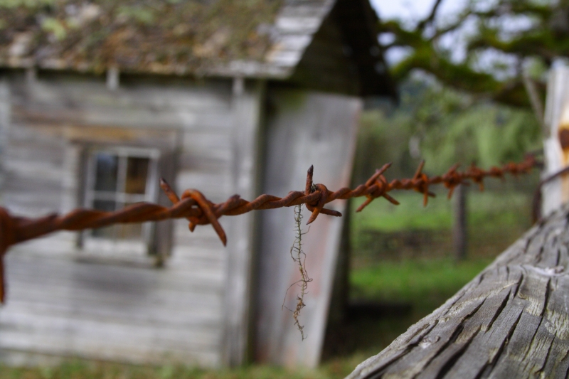 Barbed Wire Shack
