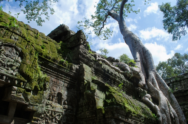 Basking In The Daylight At Ta Prohm