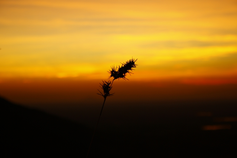 Beauty Of Sunset Behind This Small Flower