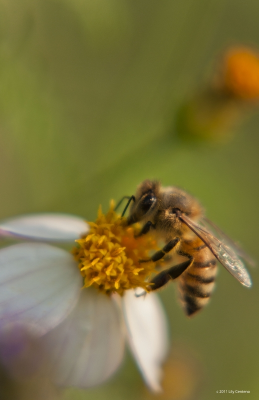 Bee Eating