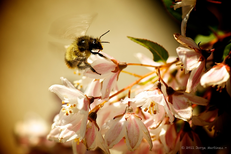 Beesy Afternoon…