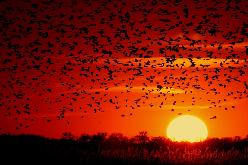 Black Bird Sunset