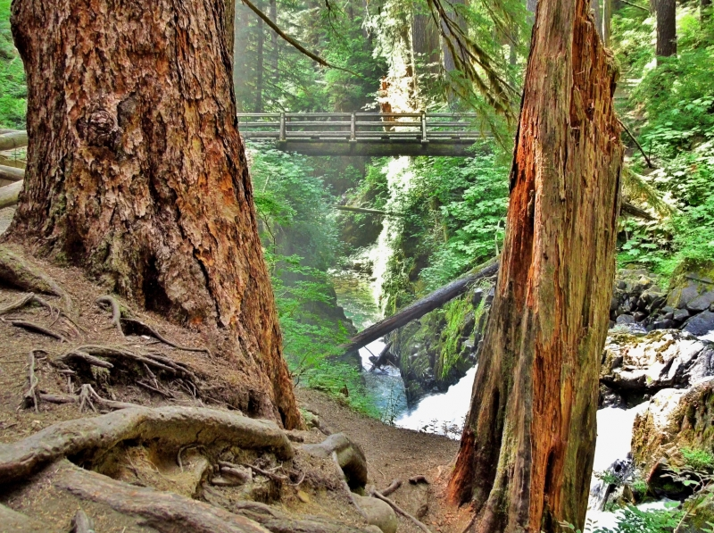 Bridge Over The Sol Duc River