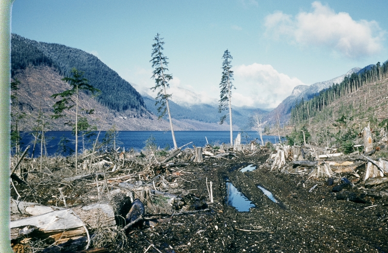 British Columbia Logging