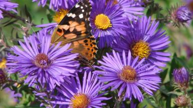 Butterfly's And Blooms
