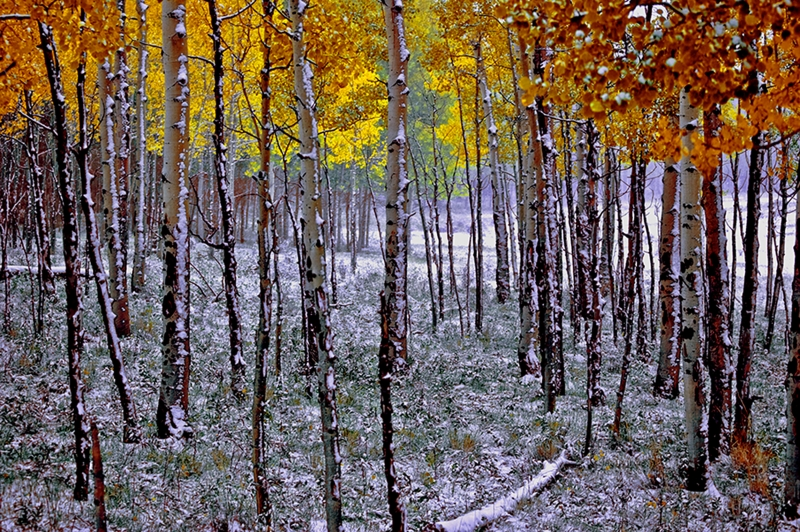 Changing Aspens