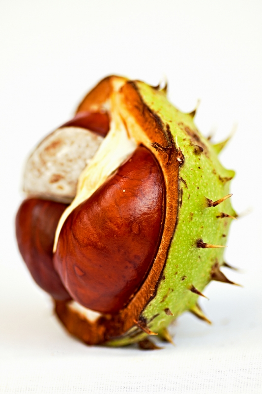 Chestnut Heart