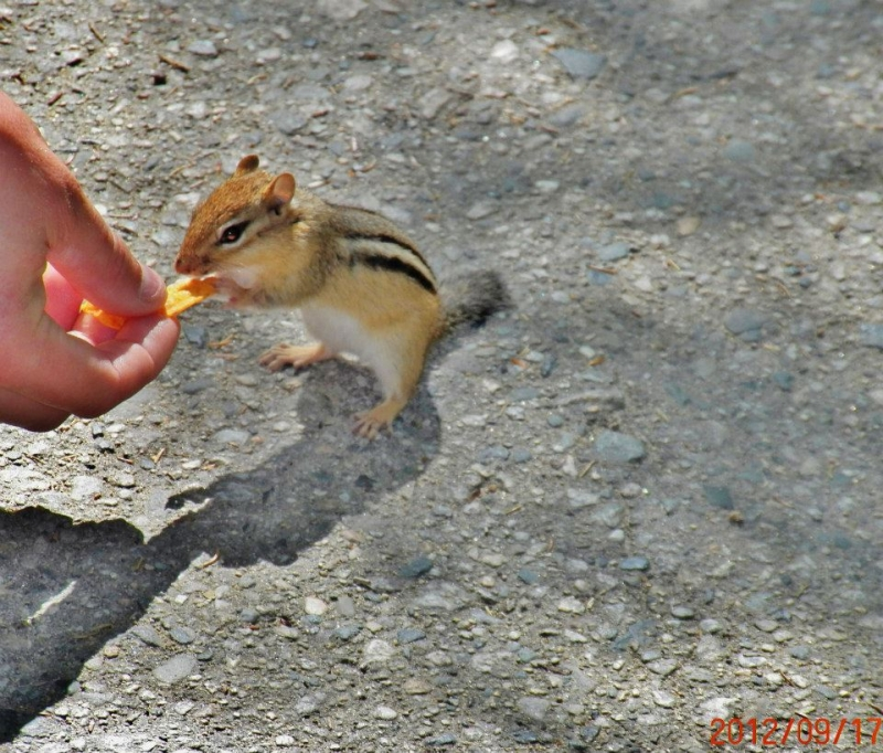 Chipmunk In The White Mountains