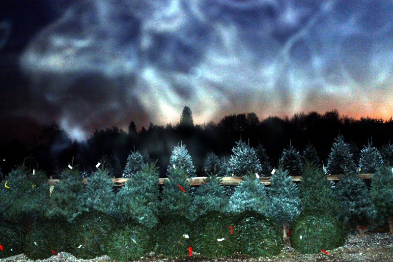 Christmas Tree Farm At Night