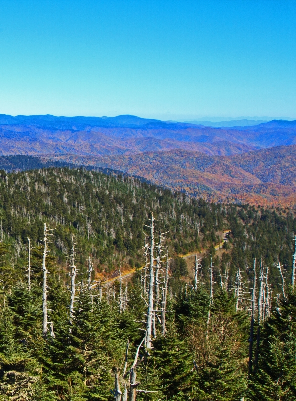 Clingmans Dome In The Fall
