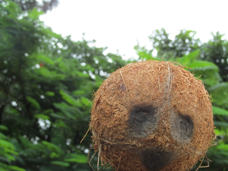 Coconut Shell As Human Face