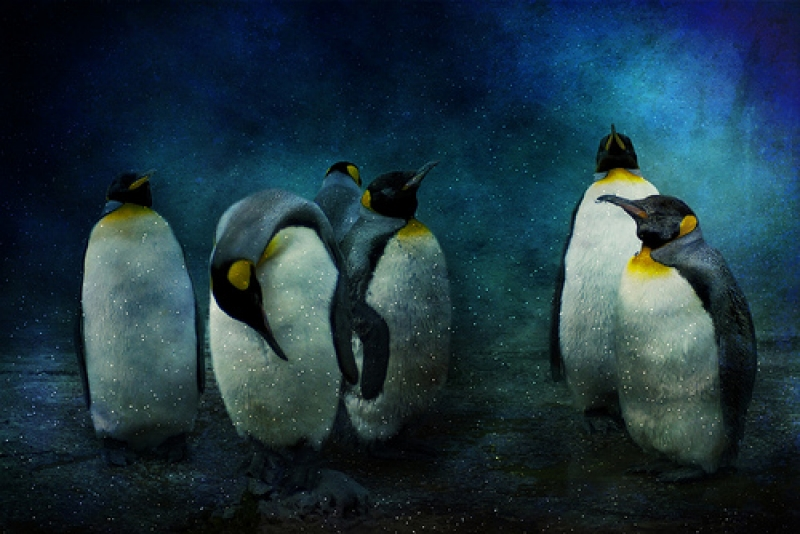 Cold Penguins