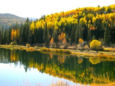 Colorado Aspen Reflections