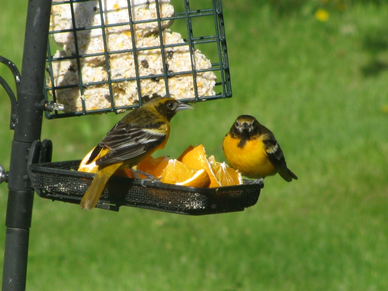Conversation At The Bird Feeder