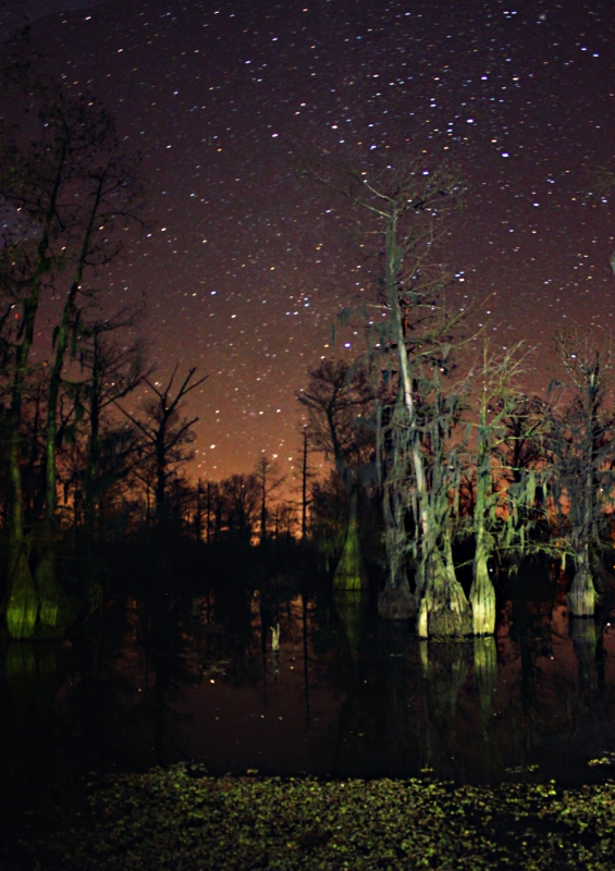 Cypress Trees Reach For The Universe