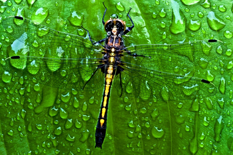 Dragonfly Drying