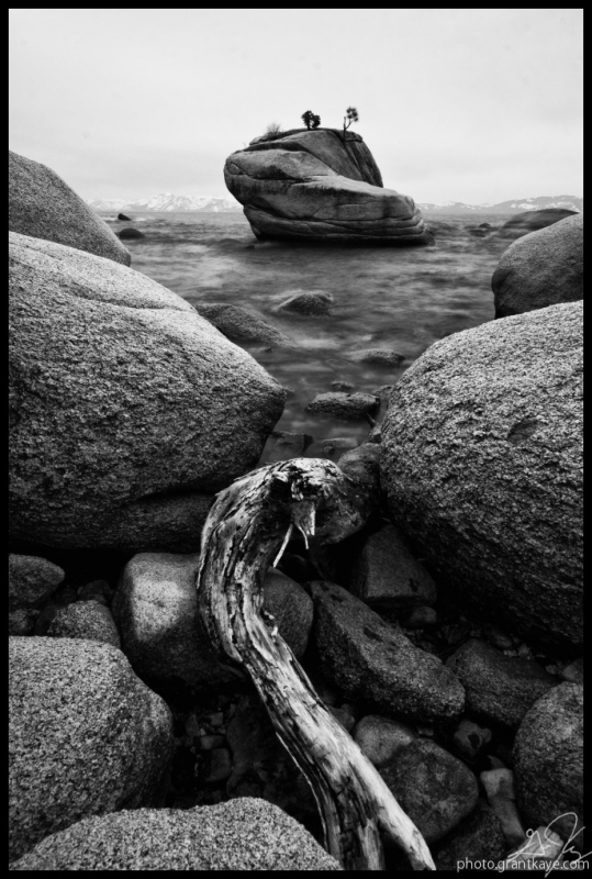 Driftwood At Bonsai Rock