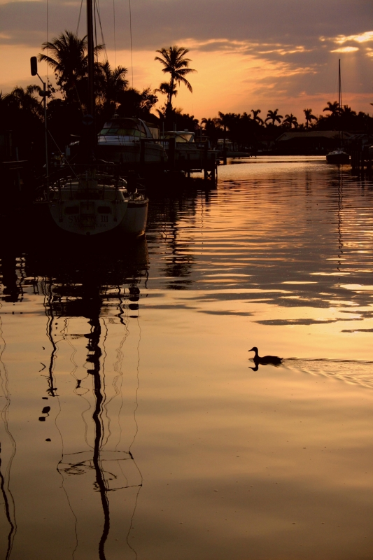 Duck At Sunrise