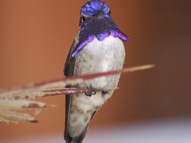 Even The Hummingbirds Relax In Cabo