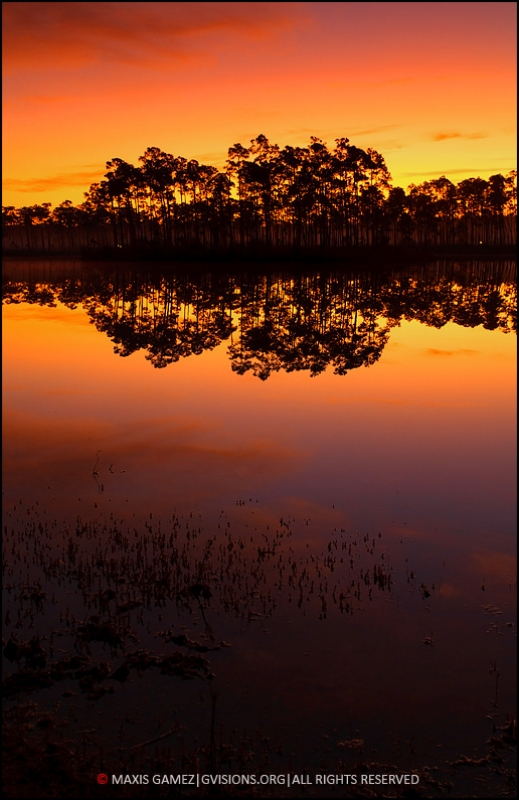 Everglades Just Before Sunrise