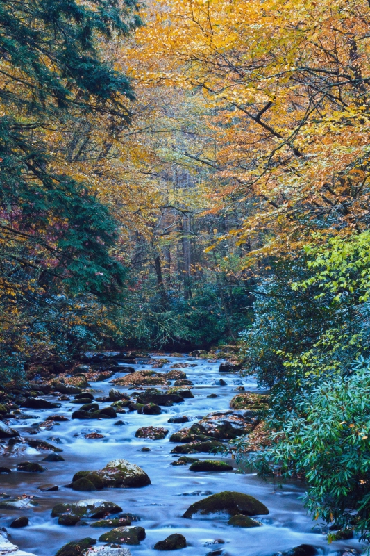 Fall Along The Oconaluftee River