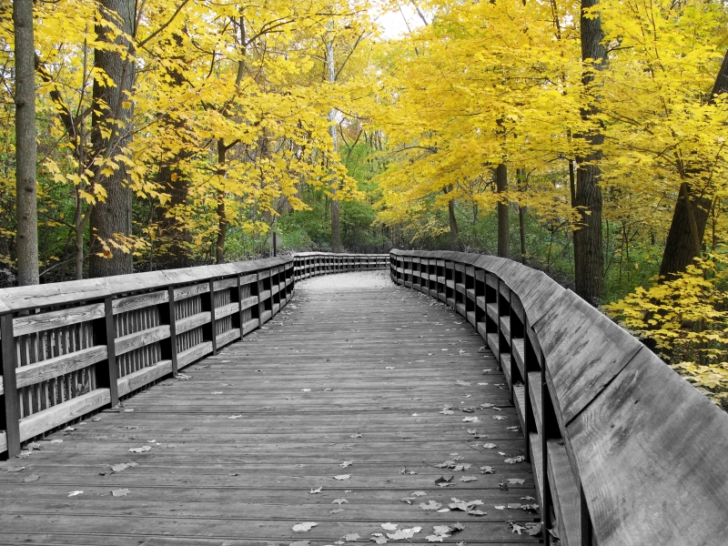 Fall Color On Boardwalk At Local Park