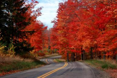 Fall Colors From Penna.