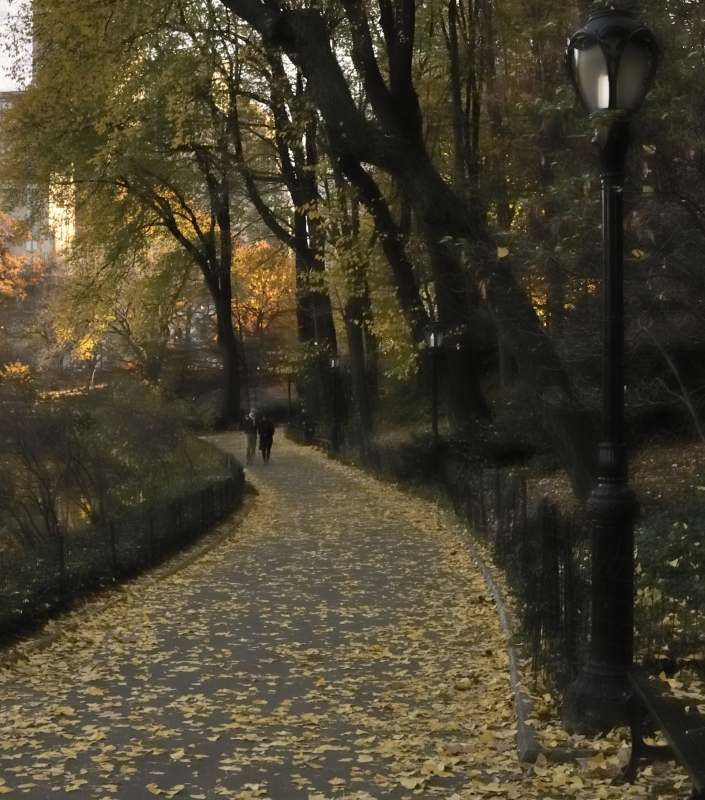 Fall Path In Central Park