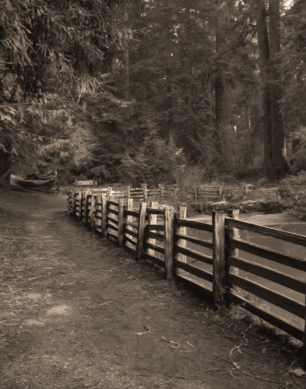 Fence In The Redwoods