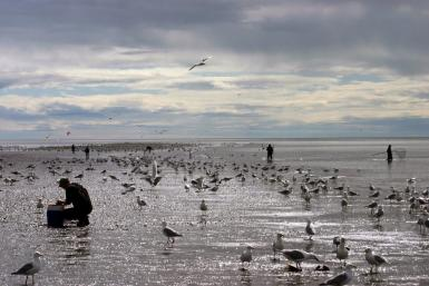 Fishermen And The Gulls
