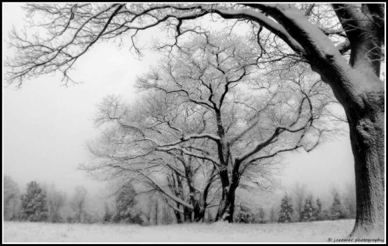 Five Trees In The Snow