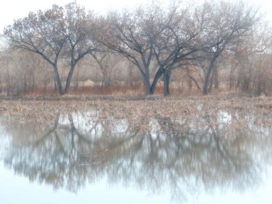 Foggy Morning At The Bosque