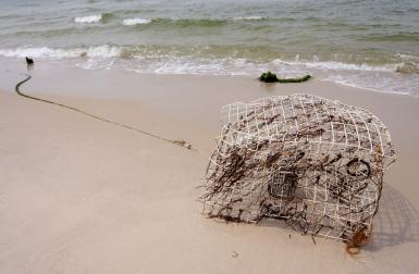Forgotten Crab Pot