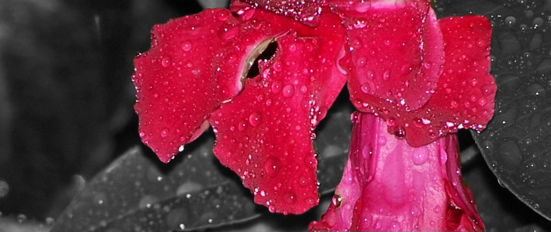 Gentle Raindrops