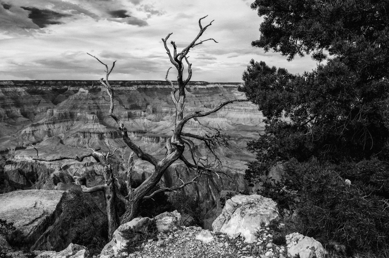 Grand Canyon Scenic