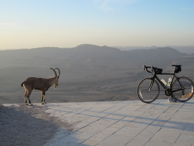 Ibex Vs. Road Bike