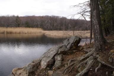 Laurel Pond