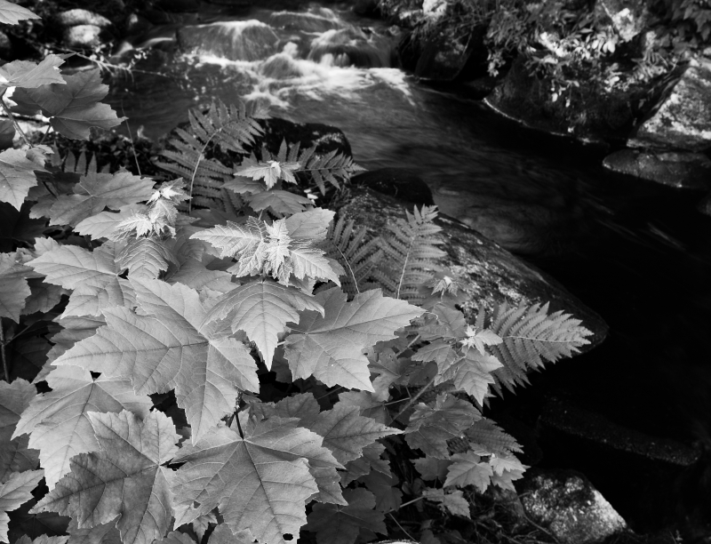Leaves By River