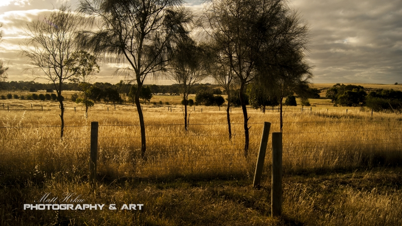 Life On The Golden Plains