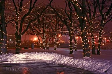 Lighted Trees