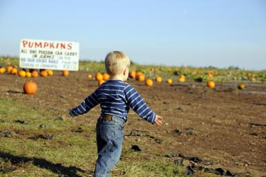 Looking For The Great Pumpkin