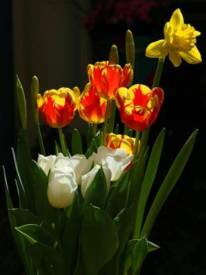 Lovely Bunch Of Tulips